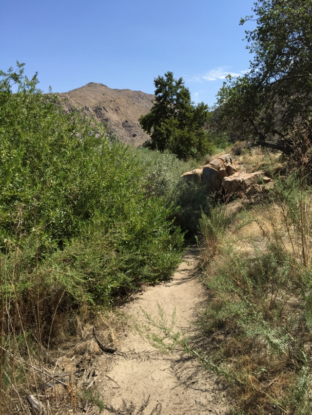 Mojave River Forks trail